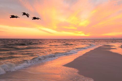 sullivan's island sun rise